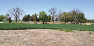 Potter Mound