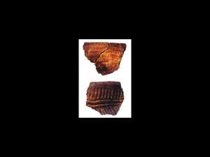 Stallings Island, located in the Savannah River eight miles upstream from Augusta, is best known for its very early pottery, a technological development that predated the advent of farming in Georgia by several millennia. Pictured are sherds of the punctated fiber-tempered pottery, ca. 3,800-3,500 years ago. The sherd on top is actually 11 centimeters wide. - Courtesy of Kenneth E. Sassaman