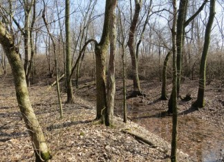 The prehistoric Yorktown Enclosure is hidden in this woods along Ind. 32 between Muncie and Yorktown. (Photo: The Archaeological Conservancy.)