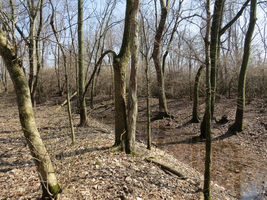 The prehistoric Yorktown Enclosure is hidden in this woods between Muncie and Yorktown. Image Courtesy of The Archaeological Conservancy.