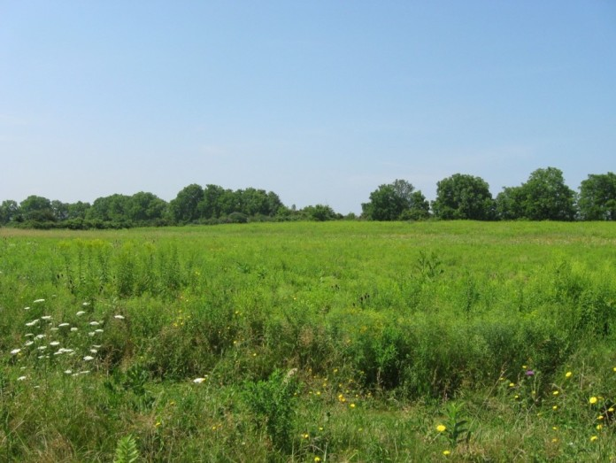 TThe Tram Preserve, containing the remains of a Seneca Village, with high summer vegetation.