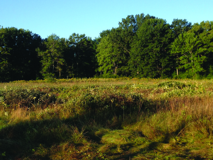 The early morning sun shines on the Esmond 2 site.