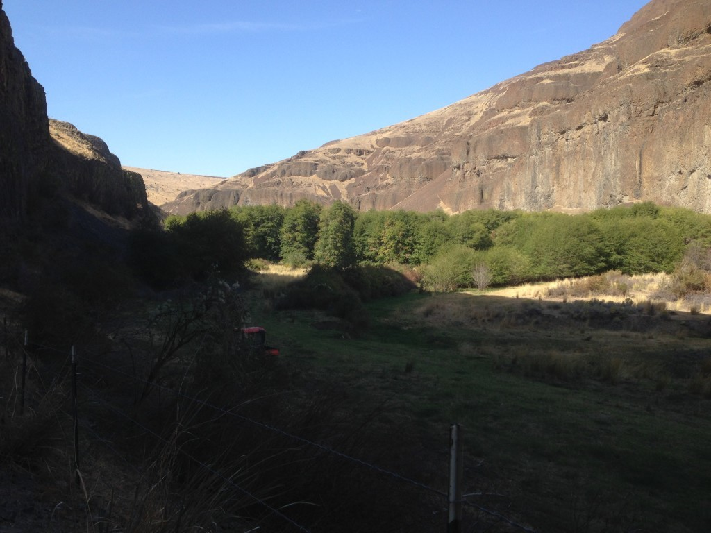 view of the canyon/creek from the rock shelter