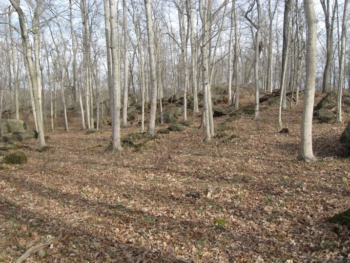 The rock outcroppings and landscape of the property are visible in these images from winter.
