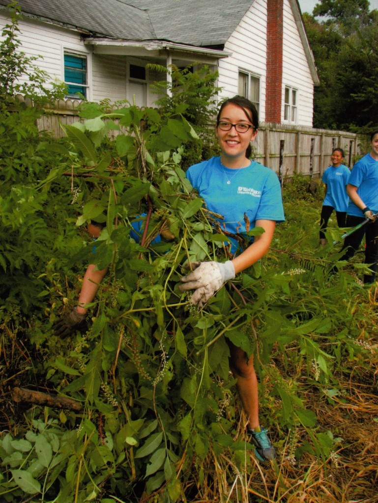 Washington University in St. Louis Kathryn M. Bruder Scholars clearing our fence line.