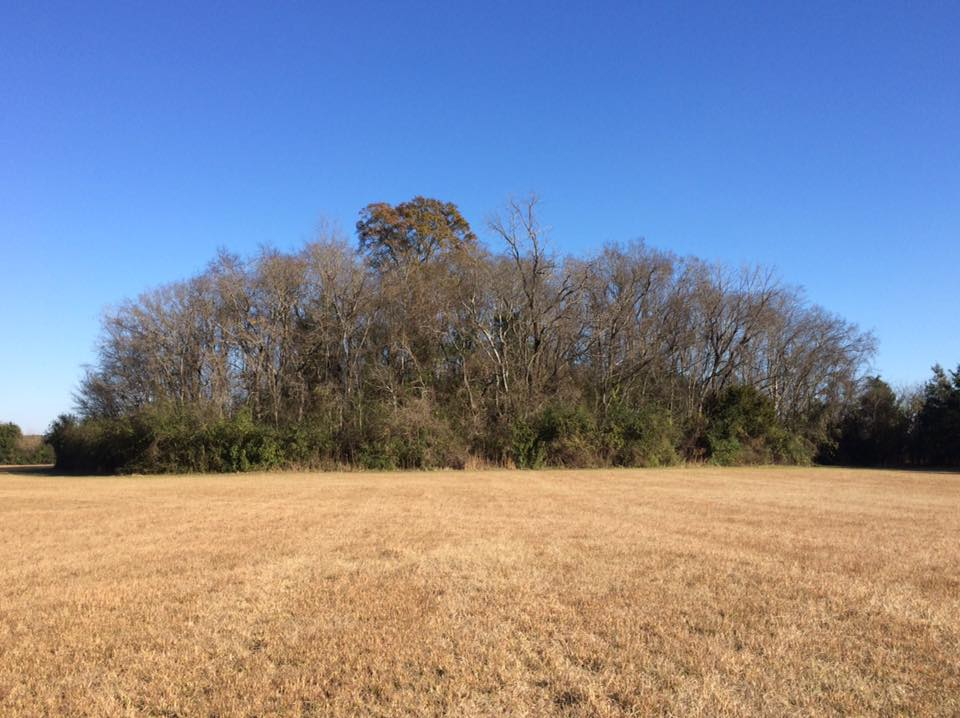 Mound In Winter, Ingomar Mounds.