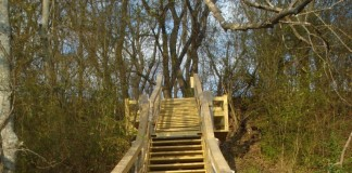 Stairway up Mound 14, Ingomar Mound