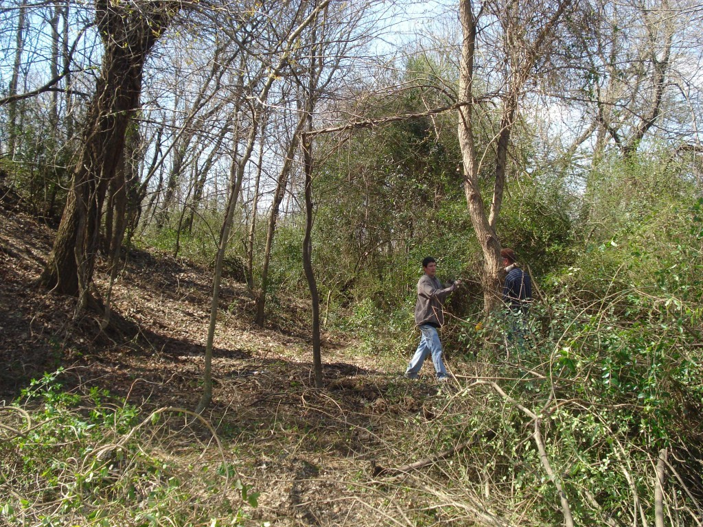Removing Brush on Cavanaugh Mound, Arkansas