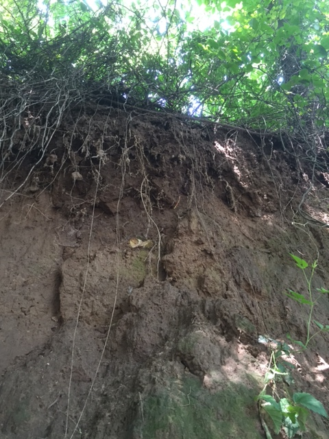 Major Erosion at Cavanaugh Mound