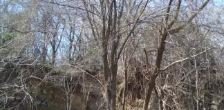 Major Erosion at Cavanaugh Mound