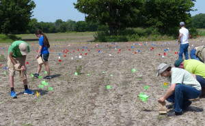 Researchers conducting a surface survey mark the locations of stone flakes, points, and tools brightly colored flags. Credit: Donald Blakeslee