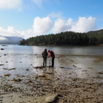 Daryl Fedje (left) and a colleague search for evidence of ancient humans in an intertidal zone. Credit: Aurora Skala