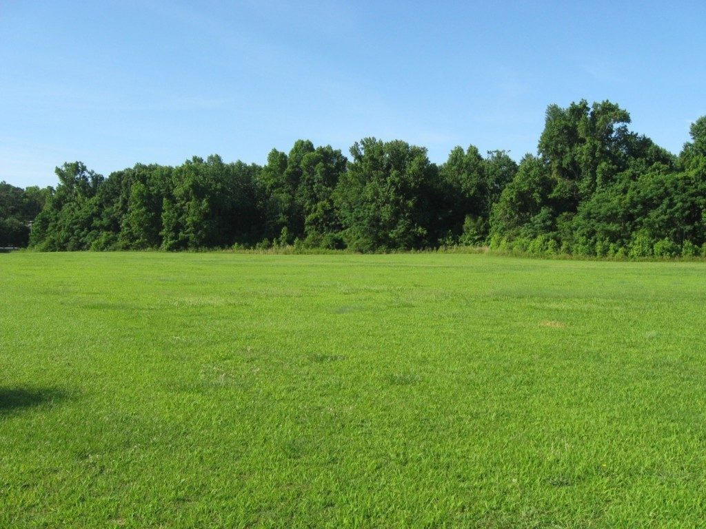 A view of the Governor Edenhouse Preserve. Photo: The Archaeological Conservancy.
