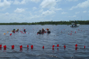 Archaeologists work at an underwater site. The red flags show the location of buried wooden posts. The yellow flags mark a long transect. credit: Heather McKillop