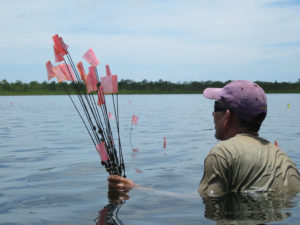 A researcher collects flags at the end of the field season. Removing the flags protects the sites by hiding their locations. credit: Heather McKillop