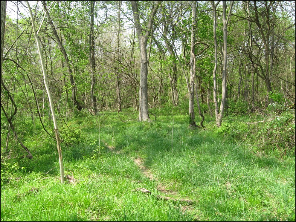 The Rosenstock Archaeological Research Preserve, Maryland. Photo The Archaeological Conservancy.