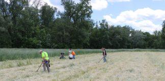 Metal Detecting Work Underway at Queen Esther's Town. Credit: Binghamton University Fieldschool
