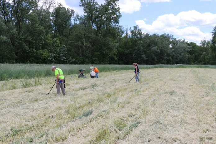 Metal Detecting Work Underway at Queen Esther's Town. Credit: Binghamton University Fieldschool