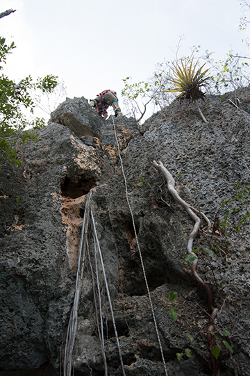 Archaeologists had to scale cliffs to reach some of the caves. Credit: Jago Cooper and Alice Samson