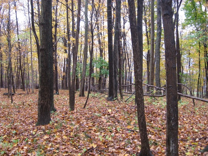 The Footer Preserve in New York State. Photo The Archaeological Conservancy.