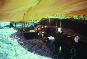 One hundred and sixty-eight sets of ancient remains were recovered from the Windover site. During the excavations much of the site was kept damp with plastic sheeting. Credit: Richard Brunk.