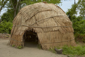 A recreated Wampanoag house, or wetu, at Plimoth Plantation. This wetu is a summer house made with a frame of wooden poles covered with reed mats. It typically accommodated an extended family and was located adjacent to their planting and fishing grounds near the coast. Credit: Bruce T. Martin.