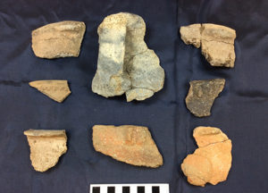 A collection of vessel rims from different structures at the site. A number of the rims contain small lug handles that are typical Mississippian decorations. Credit: Maureen Meyers.
