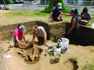 Students uncover the bones of a partially butchered calf that was buried in a trash pit with English and Native ceramics. Since the Wampanoag did not have domestic cattle, the archaeologists know this animal came with the colonists. Credit: David Landon.