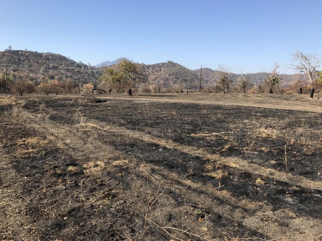 Burned Landscape at Borax Lake Preserve
