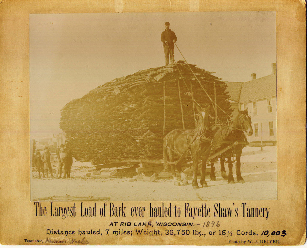 Image of a load of bark destined for the bark mill. The bark was ground into a powder before being used for tanning. This image references a tannery in Wisconsin, which is where the Shaw family reestablished its tannery business following their failure in the northeast. Image courtesy of the Rib Lake Historical Society.