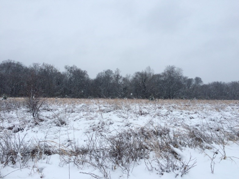 The Bryant Preserve waits for spring under a new snow.