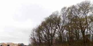 The eight-foot-high Perthshire Mound is covered by trees. Credit: Archaeological Conservancy.