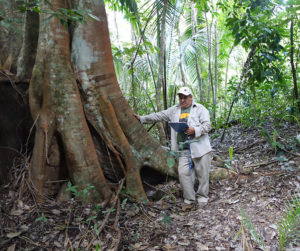 Paulino Morales, who co-directed El Pilar's LiDAR survey, examines an area where, according to the LiDAR data, cultural resources may be found. Credit: MesoAmerican Research Center.