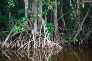 TOUR | Native Peoples of Florida's Mangrove Coast @ Southern Florida | Ohio | United States